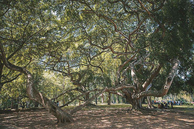 Entremêlement arboricole
