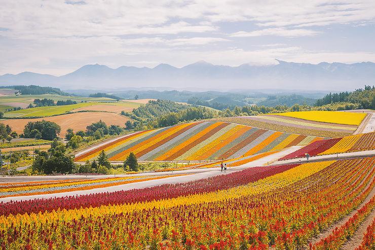 Pastel japonais, Hokkaido, Japon