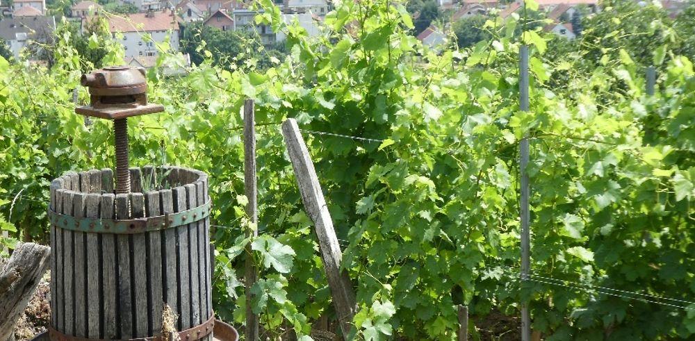 Tokaj, l'un des meilleurs vins du monde à 2h30 de Budapest
