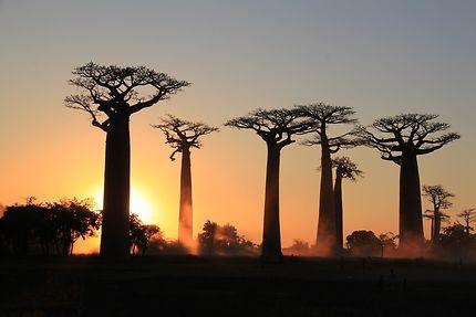Sur la route des baobas