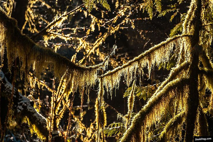 Cathedral Grove, Mac Millan Provincial Park