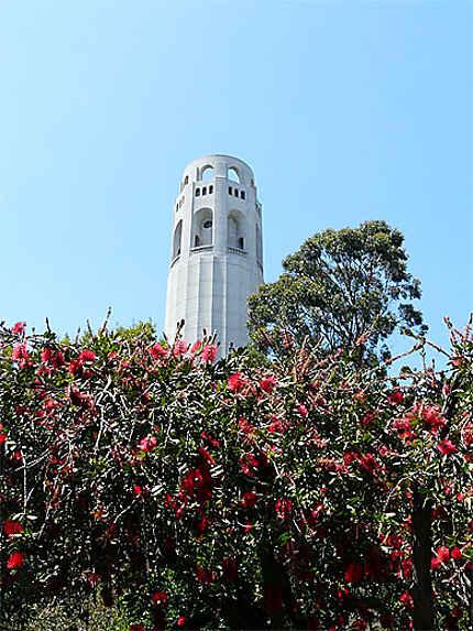 Coit Tower dans son écrin de fleurs