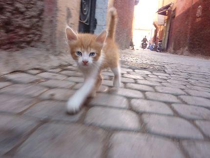 Jeune Chat dans la Médina