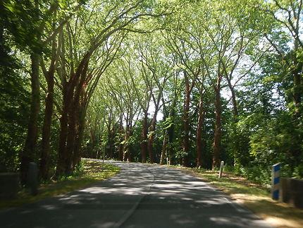 Magnifique route en allant au château du Marais