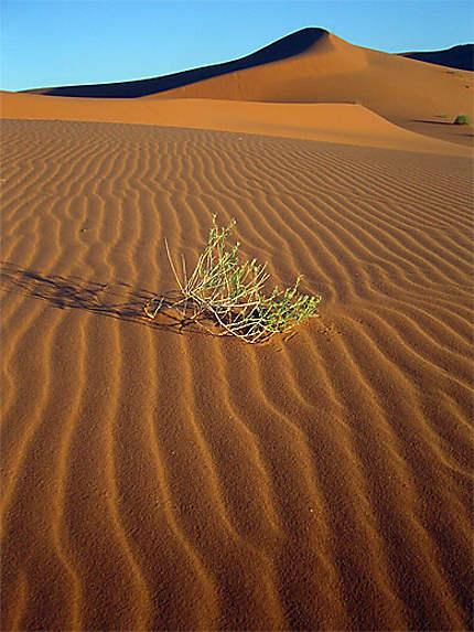 Lever du jour dans le désert