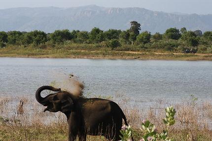 éléphant sortant de l'eau