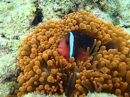 Snorkeling à Balicasag