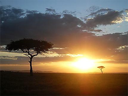 Soirée dans le masaï-mara