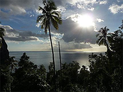 Jeux de lumière dans les palmiers