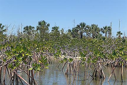 La mangrove Lucayan National Park