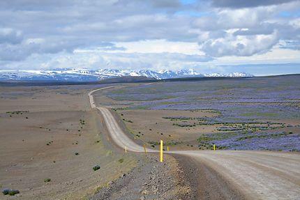 Route 85 dans les lupins au nord de l'Islande