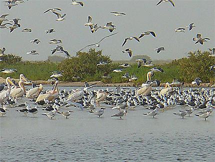 Faune Du Banc Darguin Oiseaux Banc Darguin Côte Atlantique