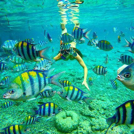 Danse colorée avec les poissons!