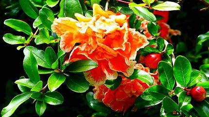 Royal Botanic Garden - Fleurs