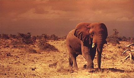 Crépuscule à Amboseli