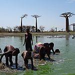 Morondava - Allée des baobabs - Pêche à la main