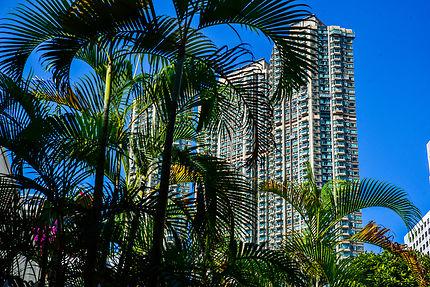 Jungle urbaine à Kowloon