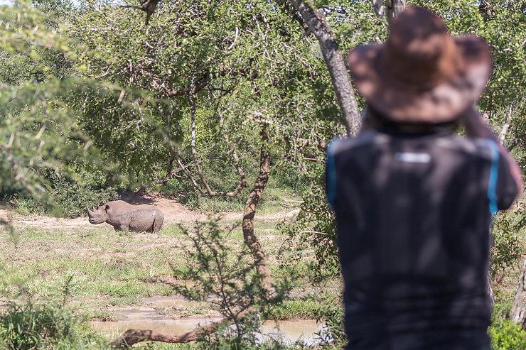 Tête à tête avec le rhinocéros noir