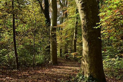 La forêt de Robertsau