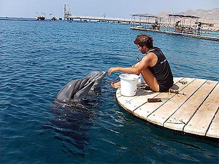 Le repas des dauphins de dolphin reef