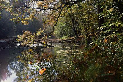 Forêt rhénane