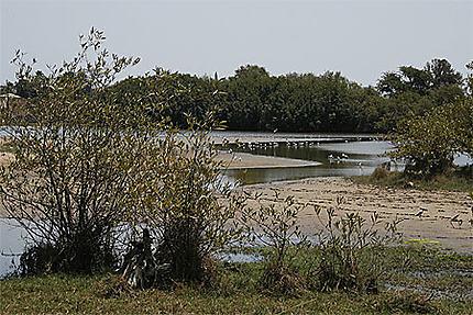 Bras de rivière aux oiseaux