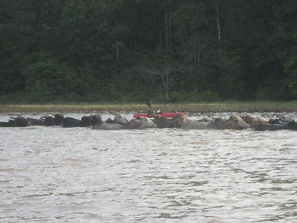 Quand le cow boy est en kayak...