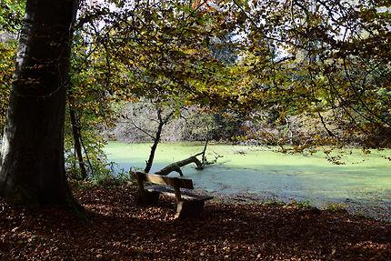 Un écosystème extraordinaire : la forêt rhénane