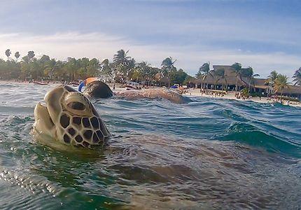 Le tuba et la tortue (respirations synchronysées)