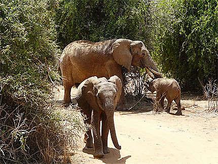 Eléphant avec deux éléphanteaux