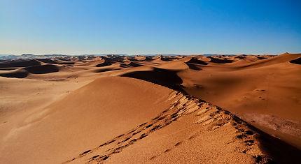 Rosée matinale des dunes