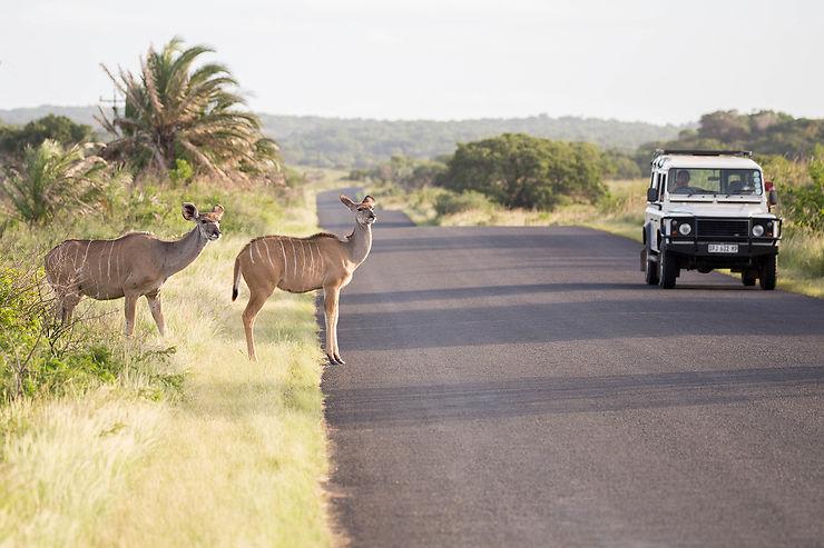 Isimangaliso Wetland Park et Cape Vidal : entre savane et océan