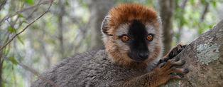Voyage à Madagascar © Pel90