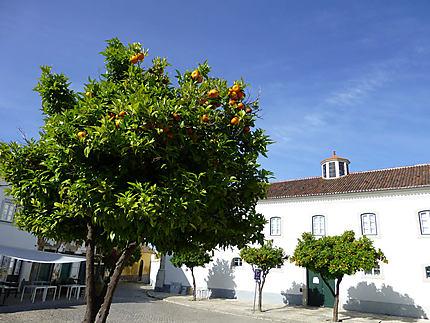 Les orangers près de la cathédrale
