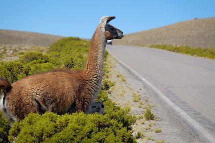 Watch out ! Salinas y Aguada Blanca, Pérou