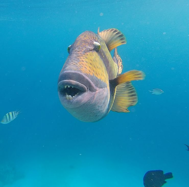 Tiger fish, Egypte
