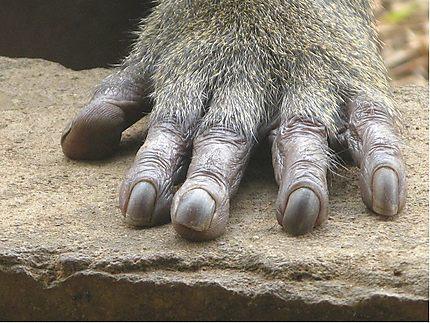 Séance de manucure au zoo Mvog-Betsi