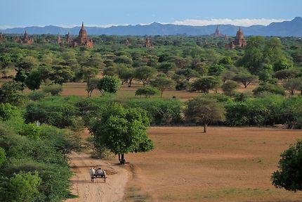 Among temples, Bagan en Birmanie