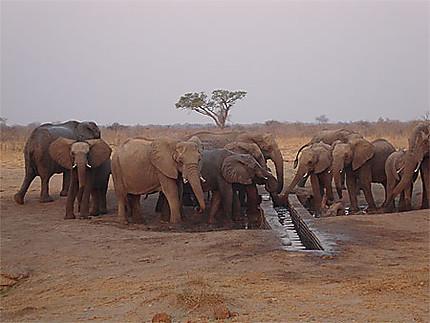 Point d'eau avec éléphants