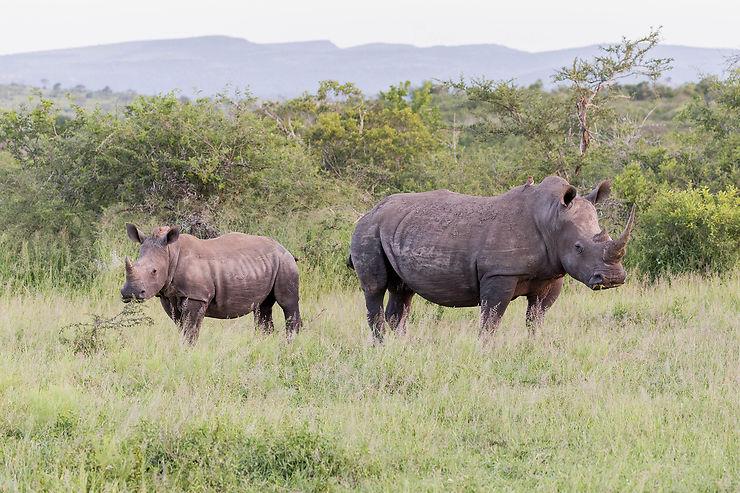 Afrique du Sud : dans les réserves du KwaZulu-Natal