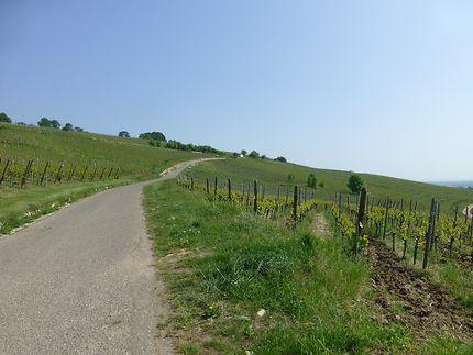Au cœur du vignoble à Riquewihr, Alsace