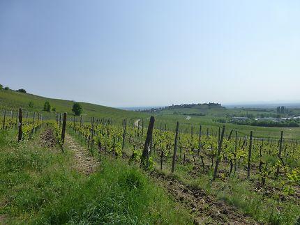 Paysage séculaire à Riquewihr, Alsace