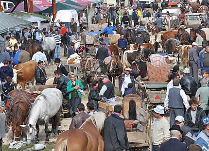 Marché aux bestiaux à Albac en Transylvanie