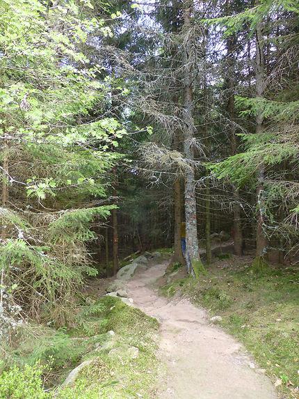 Au cœur de la forêt d'Orbey (sentier pieds nus)