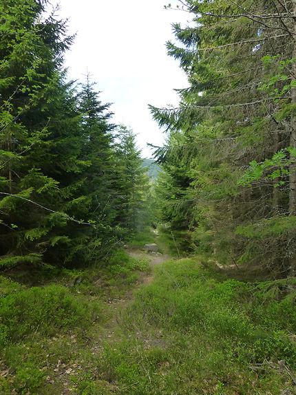 Forêt vosgienne, Orbey