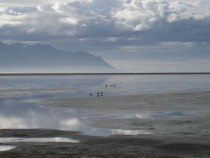 Soirée à marée basse dans le Skagafjörður