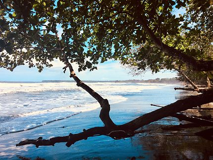 Playa Negra - Cahuita