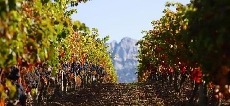 Sur la route du vin, on déguste !