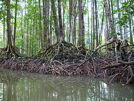Mangrove River à Sabang