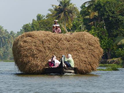 Transport sur les backwaters à Kumarakom